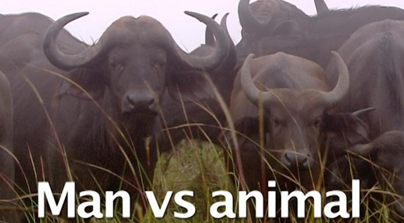 Man vs Animal