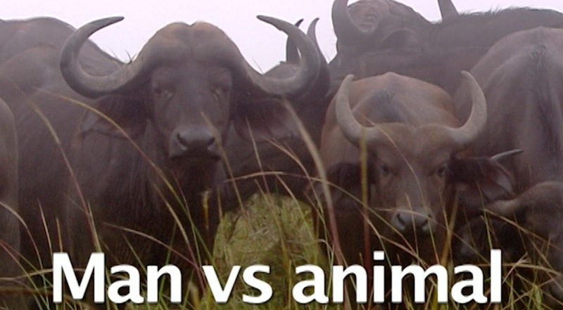 Man vs Animal