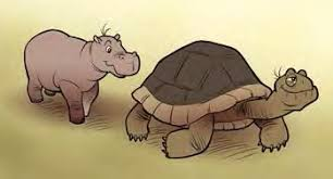 Kids Hippos and the Tortoise